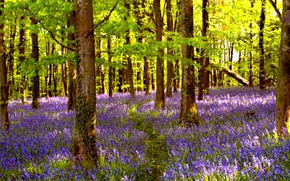 The Lands of King Arthur: Wales in Spring
