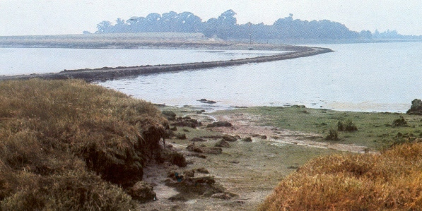 Causeway at Maldon (looking across to Northey Island, Maldon, Essex; where Vikings had made a beach-head)