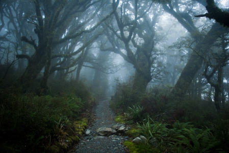 Inspiration of Medieval Language & Literature: A Halloween Setting All-Year Round -- The Mysterious Forests of Chivalric Romance (pic by David Vogt, Shutterstock, used w/permission for #127964312)